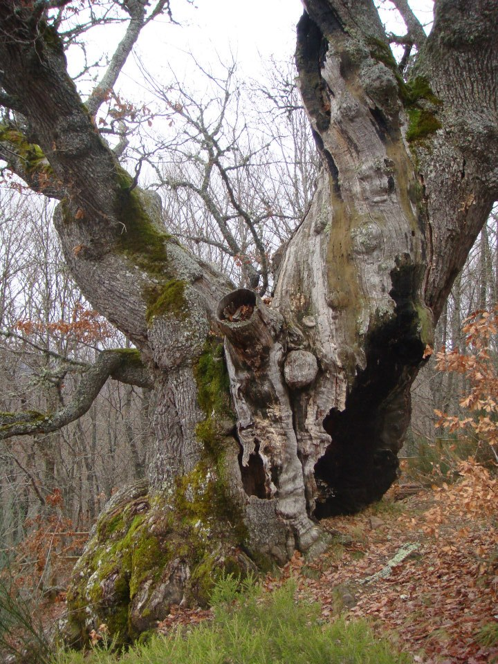 El árbol Sagrado.